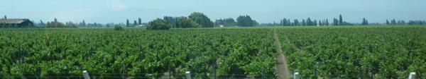 ch-1210-229-t-wijngaarden