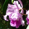 co-0311-054-t-bloem
