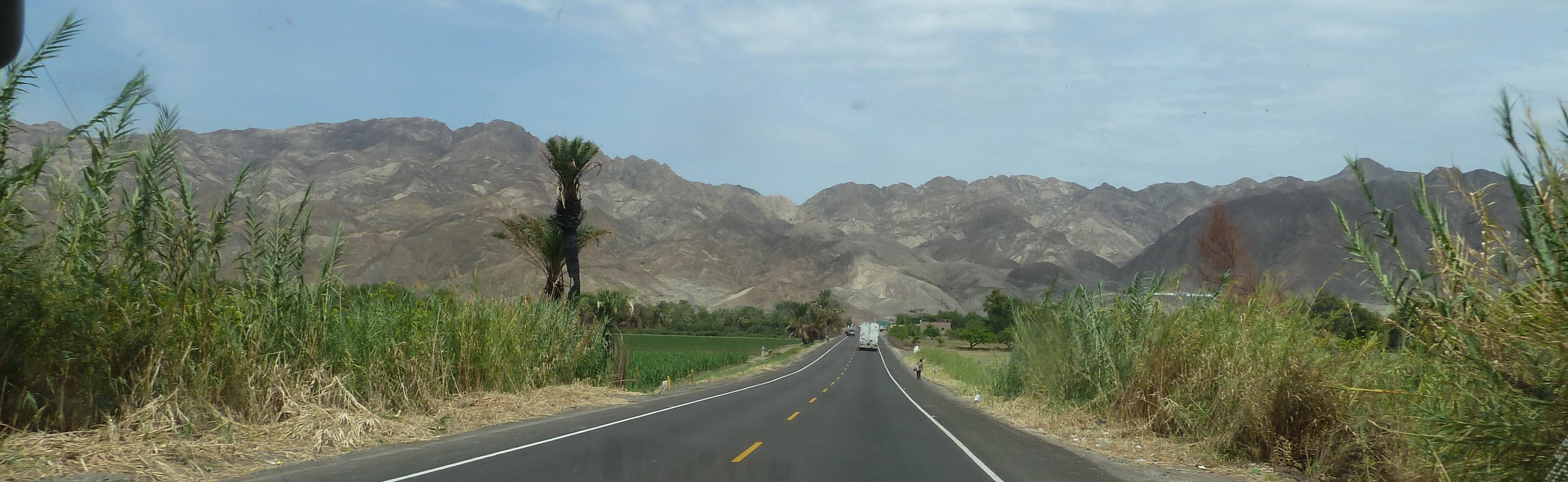 pe-0211-981-t-woestijngroen